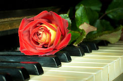 Beautiful rose on the keys of old piano Stock Image