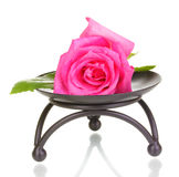 Beautiful rose on metal stand Stock Images