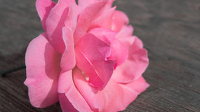 Beautiful rose. On the old textural table Stock Photography