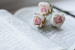 Beautiful rose on the open book. Flowers on bible text closeup royalty free stock photo