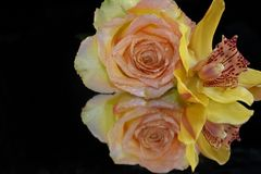 Beautiful rose with orchid close up on the mirror royalty free stock photo