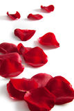 Beautiful rose petals Stock Photography
