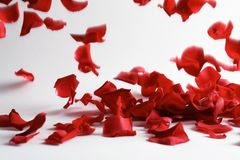 Beautiful rose petals falling stock photo
