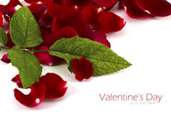 Beautiful rose petals isolated Stock Image
