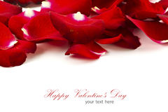 Beautiful rose petals isolated Stock Images