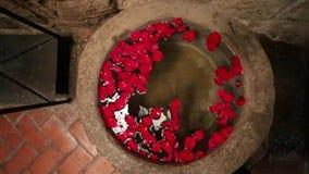 Beautiful rose petals on water pond Stock Photos