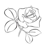 Beautiful rose - vector sketch Royalty Free Stock Photography