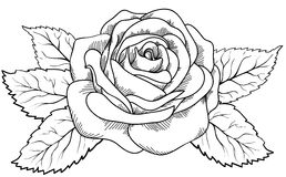 Beautiful rose in the style of black and white engraving. Stock Photo