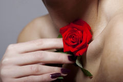 Beautiful rose touches the female neck Stock Image