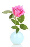 Beautiful rose in vase Royalty Free Stock Photos