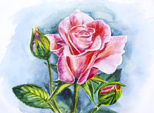 Beautiful rose, watercolor painting Stock Photo
