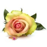 Beautiful rose with wedding ring Stock Photos