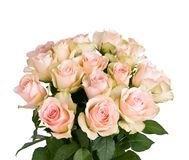 Beautiful roses. A bouquet of beautiful pink roses on white background Royalty Free Stock Image