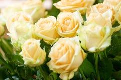 Beautiful roses Royalty Free Stock Photos