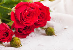 Beautiful roses Stock Photos