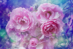 Beautiful roses artistic dreamy background with bokeh lights and floral frame Stock Photo