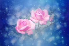 Beautiful roses artistic dreamy background with bokeh lights Royalty Free Stock Photos
