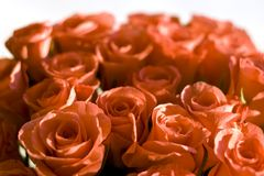 Beautiful Roses Background. Beautiful floral background made from red roses Royalty Free Stock Photography