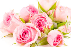 Beautiful Roses Background Stock Photos