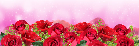 Beautiful roses background Royalty Free Stock Photos