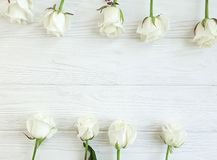 Beautiful roses blossom greeting summer romantic border on white wooden background frame. Beautiful roses white wooden background frame border romantic greeting stock images