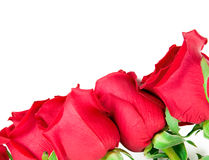Beautiful Roses Border Stock Photo