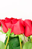 Beautiful Roses Border Royalty Free Stock Images