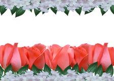 Beautiful Roses Border Stock Photos