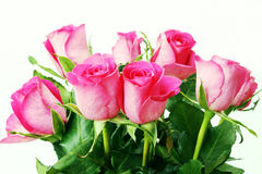 Beautiful Roses Bouquet Royalty Free Stock Photography