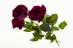 Beautiful roses in the bouquet, background for wedding cards, greeting card for birthday. Royalty Free Stock Photos