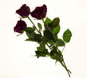 Beautiful roses in the bouquet, background for wedding cards, greeting card for birthday. Stock Images