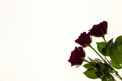 Beautiful roses in the bouquet, background for wedding cards, greeting card for birthday. Stock Photo