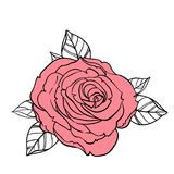 Beautiful roses bouquet drawing isolated on white. Hand drawn ve. Ctor highly detailed line art illustration. Wedding, beauty, tattoo outline design element Royalty Free Stock Images