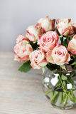 Beautiful roses Stock Photo