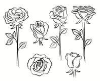 Beautiful roses flower Stock Photos