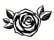 Beautiful roses flower Stock Image