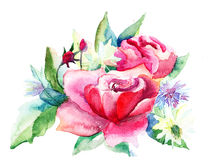 Beautiful Roses flowers Stock Images