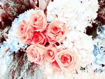 Beautiful roses flowers made with color filters sweet background. Beautiful roses flowers made with color filters for sweet background Royalty Free Stock Photos