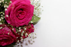 Beautiful roses formed into a beautiful bouquet Stock Photography