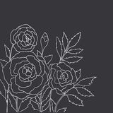 Beautiful roses isolated on black background. Hand drawn vector Stock Photo