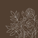 Beautiful roses isolated on dark beige background. Hand drawn illustration with flowers. Stock Photos