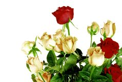Beautiful roses isolated on white background. Concept of love Stock Images