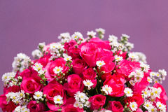 Beautiful roses and little daisy flowers background. Royalty Free Stock Images