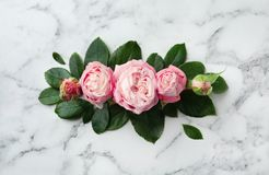 Beautiful roses on marble background. Top view stock photo