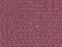 Beautiful roses wall background Royalty Free Stock Photo