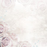 Beautiful Roses Wedding Background Stock Images