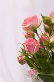 Beautiful  roses and weddings rings Stock Image