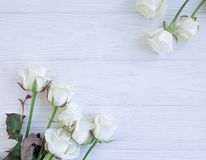 Beautiful roses blossom border on white wooden background frame royalty free stock images