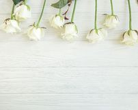 Beautiful roses blossom greeting summer celebration romantic border on white wooden background frame royalty free stock photography