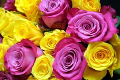 Beautiful round bouquet of pink and uellow roses flowers as background. Closeup Royalty Free Stock Photography